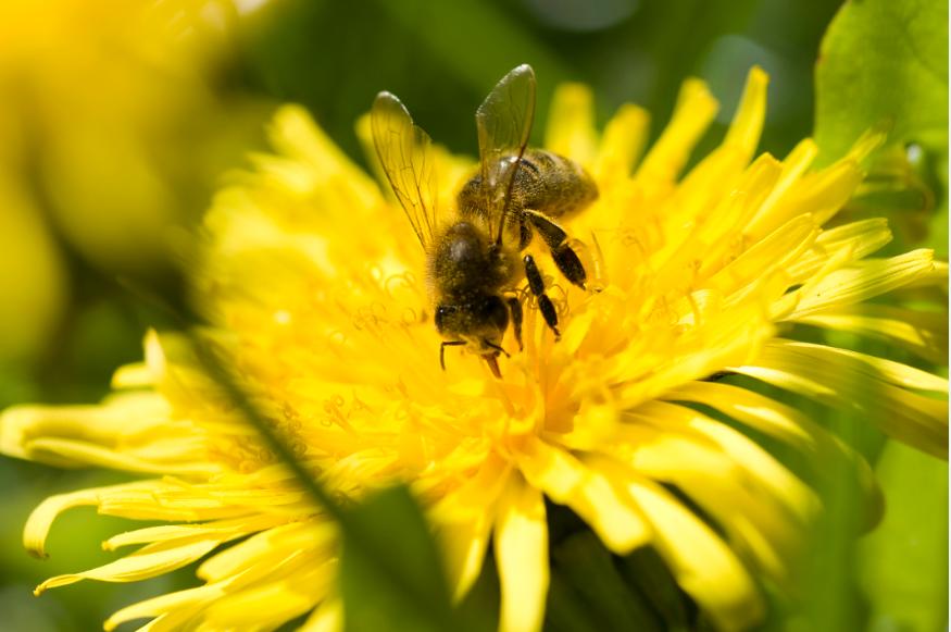 Guter Content lockt die Bienen an die auf den Honig fliegen